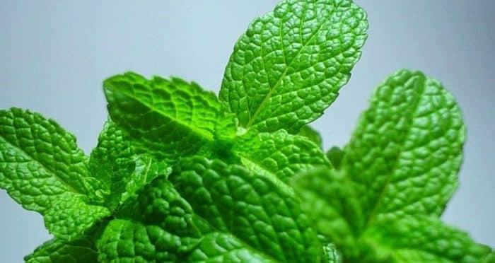 Benefícios da hortelã, propriedades nutricionais e como fazer o chá