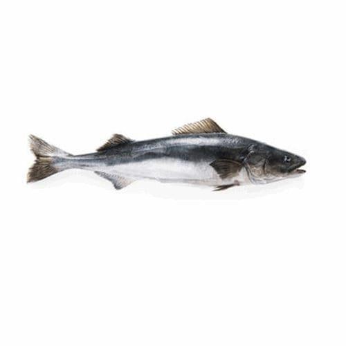 Black cod, o que é? Origem, valores e curiosidades sobre o peixe