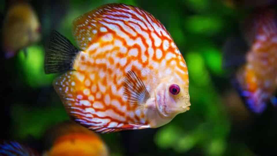 Como peixe dorme? O que você precisa saber sobre o sono do animal