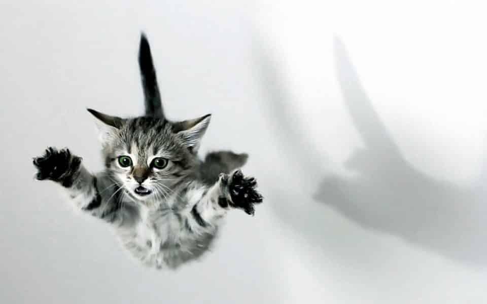 Por que o gato cai em pé? Entenda tudo sobre esse hábito felino