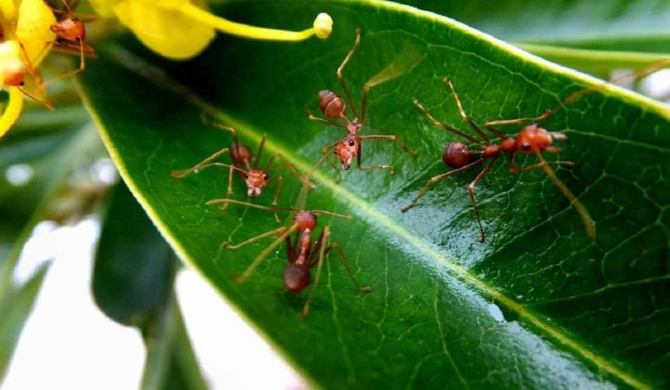 Insetos mais perigosos do mundo: espécies e características