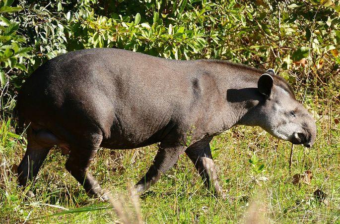 Maiores animais do mundo, quais são? Recordes de tamanho na natureza