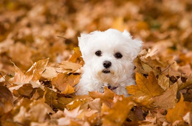 Nomes para cachorros pequenos: sugestões para te inspirar