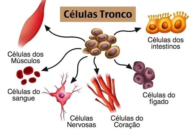 Quantas células têm o corpo humano: principais na formação do organismo