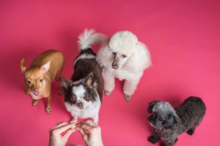Quantos anos vive um cachorro? Raças de cães e expectativa de vida