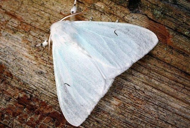 Significado da mariposa, qual é? Origem e simbolismo