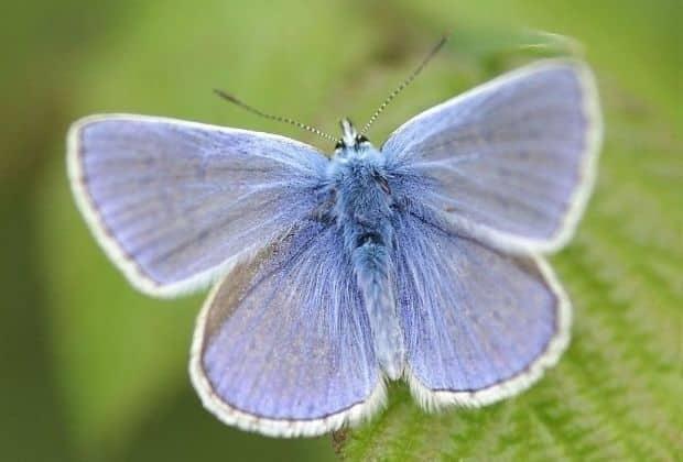 Fotografia de uma espécie